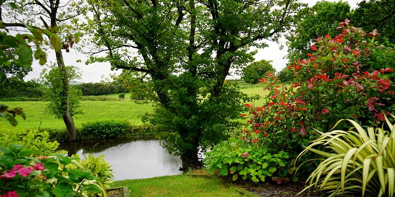 How to Pick Landscaping Plants